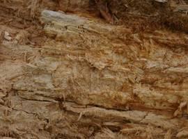 Włókna drewna będące efektem rozkładu białego drewna