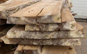 Pleśń tarcicy powstała podczas suszenia drewna
