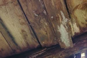Deskowanie stropu porażone przez grzybnię