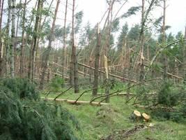 Wichura nawiedziła lasy na Dolnym Śląsku