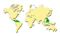 Zasięg występowania Gwajaka