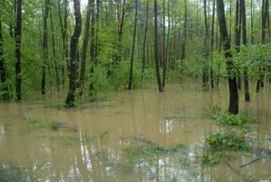 Lasy pod wodą