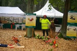 O tym, że podczas prac leśnych warto nosić kask, przekonywały pokazy na stoisku ORWLP Bedoń