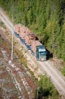 One More Pile - przyszłość transportu surowca drzewnego?