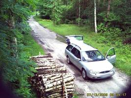 Kamery zainstalowane w lesie pomagają zidentyfikować sprawców kradzieży drewna