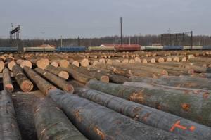 Drewno przygotowane na aukcję