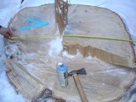 Ścięte i skradzione drzewa miały ok. 1 m średnicy