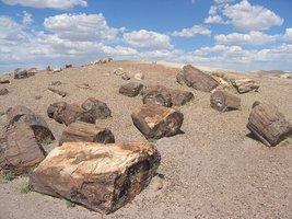 Skamieniałe drewno w Petrified Forest National Park, Arizona, USA.