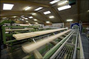 Tarcica przeznaczona do produkcji klejonki jest automatycznie sortowana.