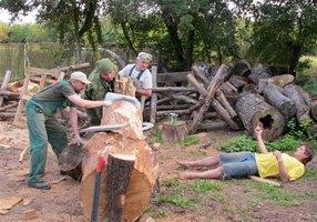 V Międzynarodowy Plener Rzeźbiarski Puszcza Zielonka 2011