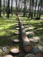 Ścinka i podział na frakcje drzew modelowych