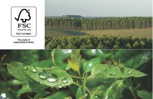 Drewno eukaliptusa z plantacji Urufor posiada certyfikat FSC