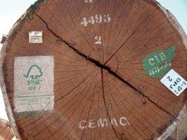 Drewno egzotyczne z certyfikatem FSC w ofercie DLH Poland