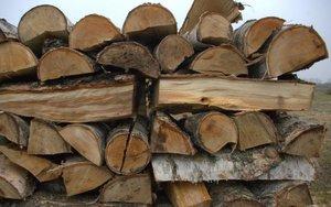 Świeże drewno o dużej wilgotności ma jasną barwę