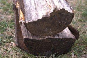 Korę drewna suchego z łatwością można oderwać