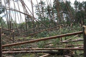 Lipcowa trąba powietrzna zniszczyła ok. 650 ha lasu
