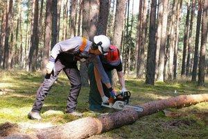 Prace w lesie są okazją do zapoznania się z techniką ścinki drzew