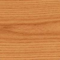 Dąb czerwony - Quercus rubra