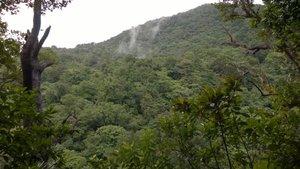Widok na zbocze porośnięte lasem deszczowym z platformy do obserwowania papug.