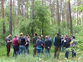 Szacunek brakarski drzew stojących