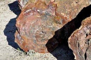 Skamieniałe drewno w Petrified Forest National Park - Park Narodowy Skamieniałego Lasu (Arizona/USA)