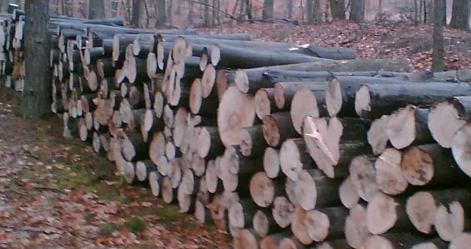 Drewno kominkowe i S2B