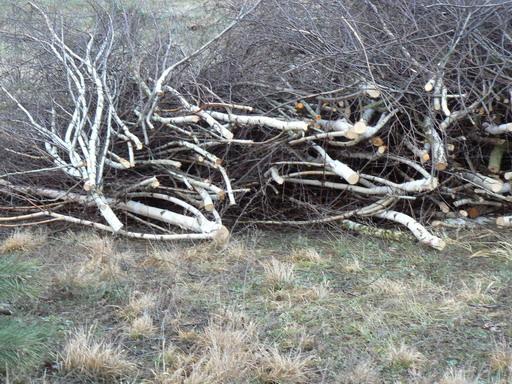 Posiadam dużą ilość odpadów drzew liśiastych na zr