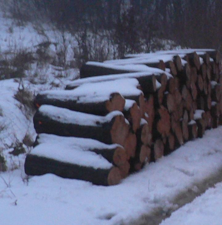 Duże ilości drewna opałowego i tartacznego
