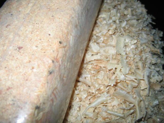 poszukuje stałych dostawców odpadów : sosna sucha