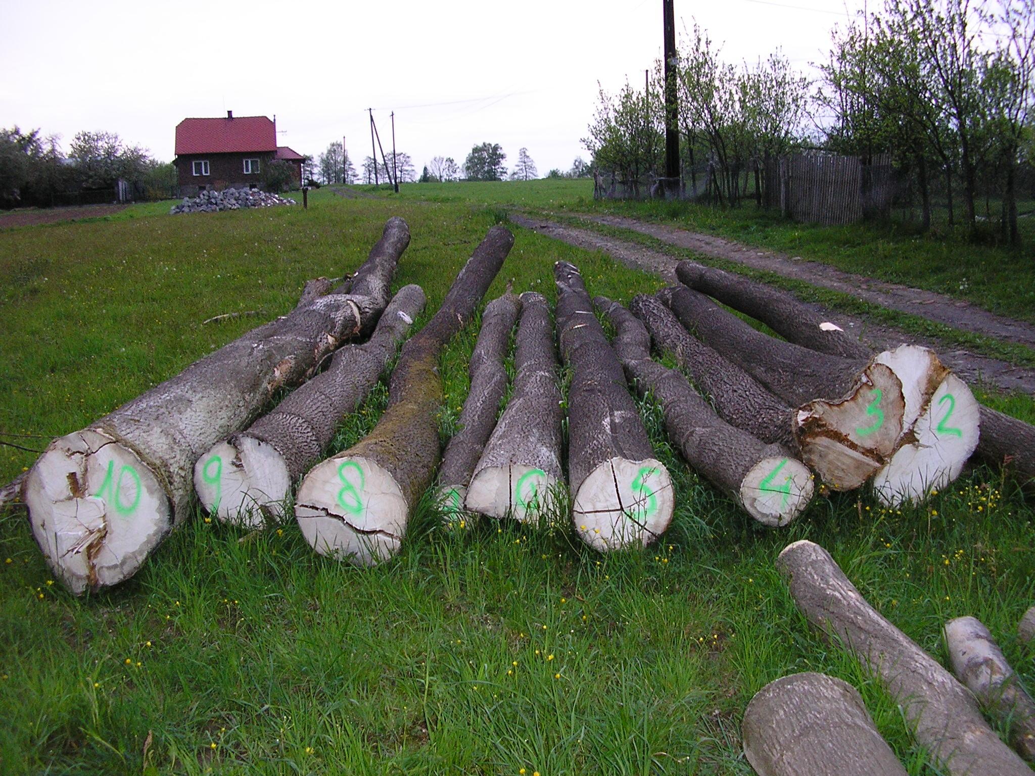 Drewno jesion, olcha, klon, jawor