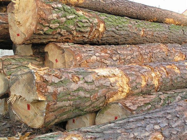drewno iglaste zamienię