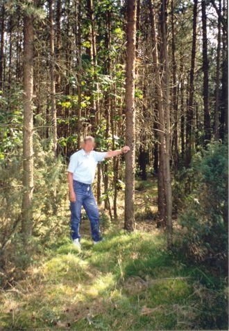 Sprzedam las sosnowy z gruntem