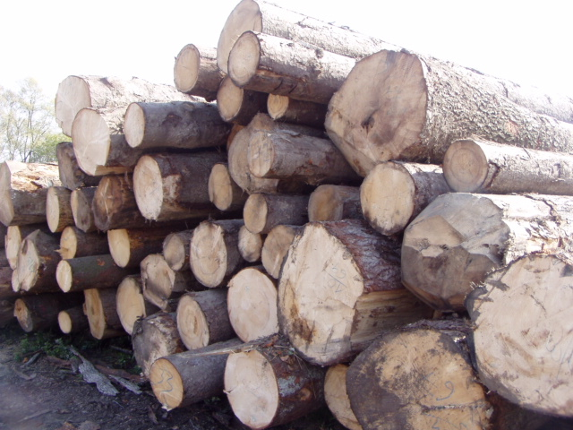 drewno na palety