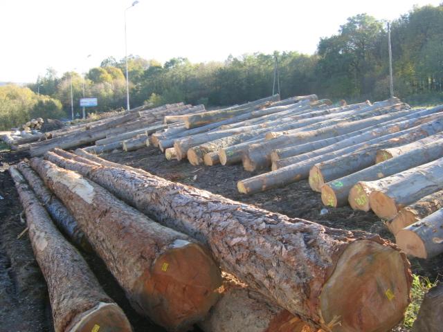 Drewno Tartaczne - BUKOWE - Kloce - Tarcica