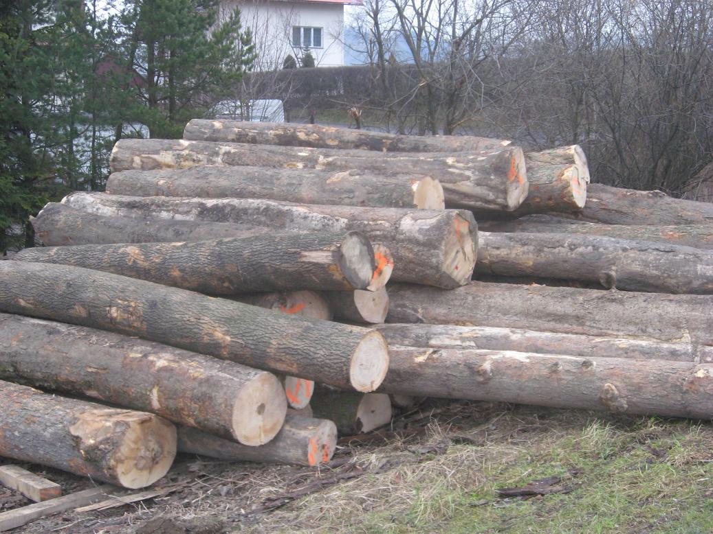 drewno jaworowe