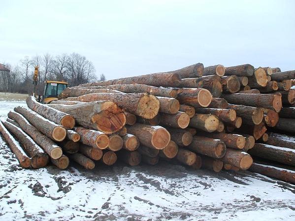 Sprzedam drewno modrzewiowe