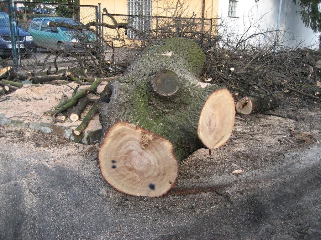 Drewno Dębowe + Jesion super tanio