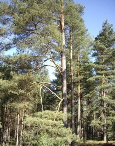 Prawie 10ha lasu w Borach T.