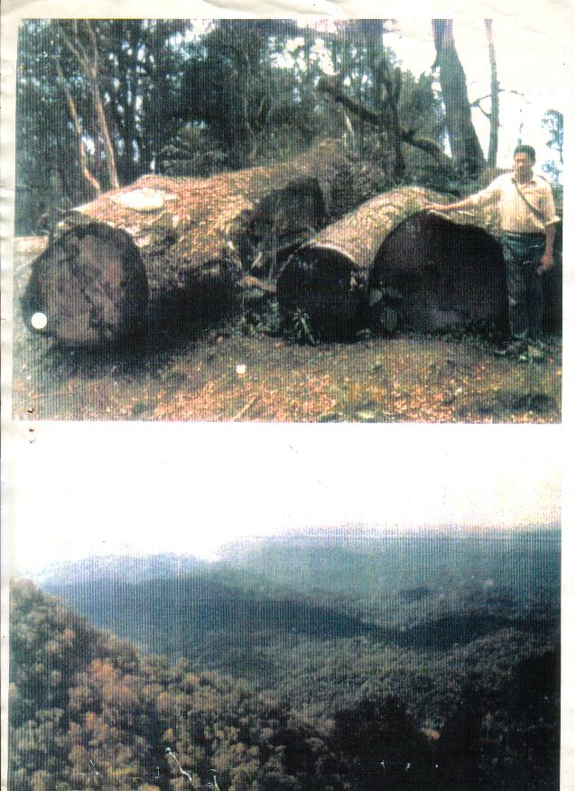 las w argentynie - okazja!