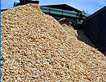 Poszukuję dużych ilości drobnej zrębki w regionie