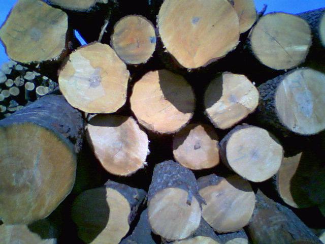 Drewno tartaczne-brzoza, olcha