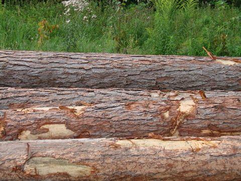 Sprzedam drewno modrzewiowe!!!
