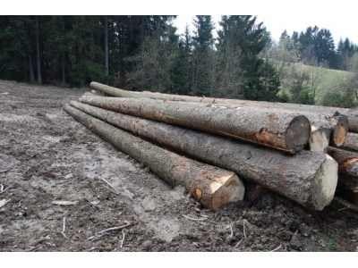 Sprzedam drzewo świerk różne klasy ceny od 145zł