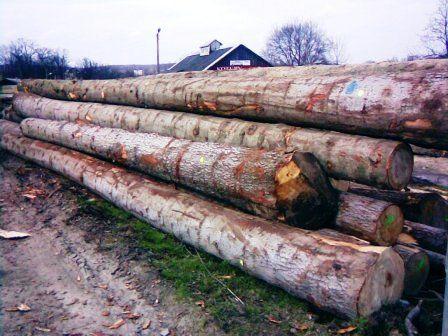 drewno iglaste świerkowe jodłowe
