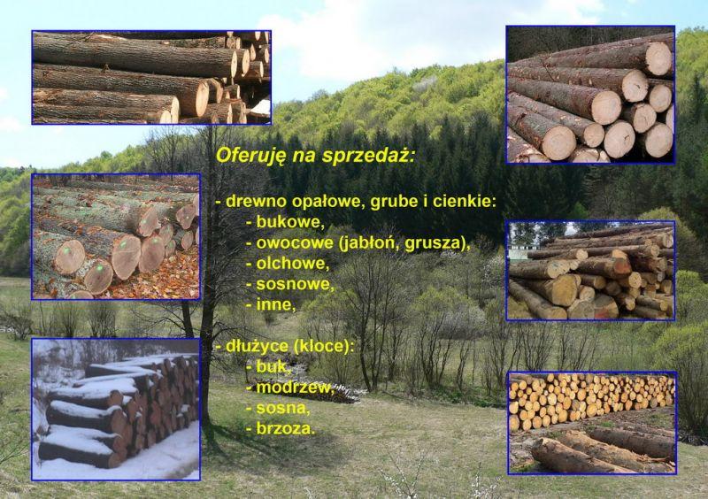 Sprzedam drewno opałowe oraz dłużyce (kloce) - buk, sosna, brzoza, olcha, modrzew i inne.