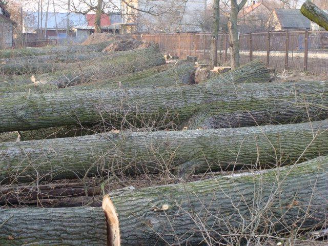 Drewno kominkowe wycinka drzew