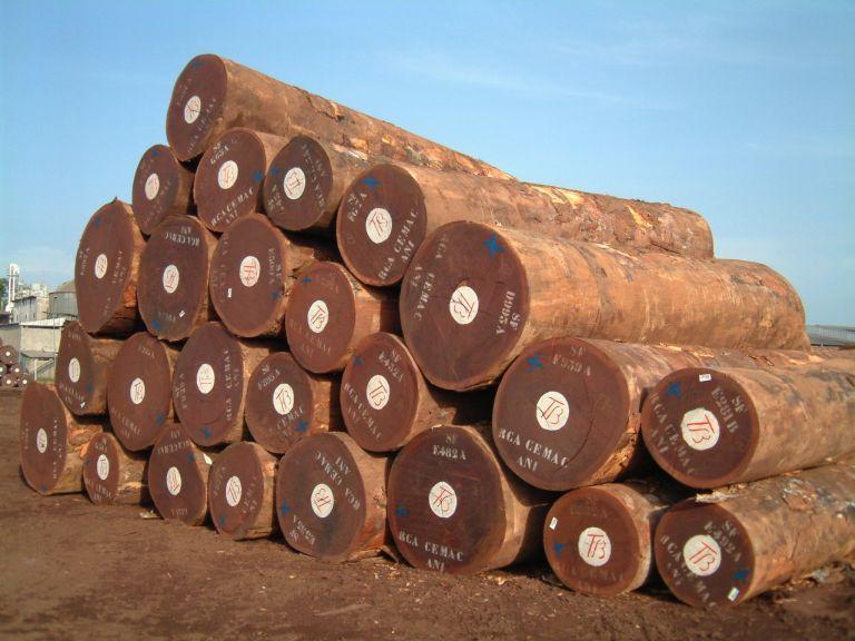 Tarcica drewno egzotyczne