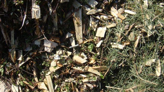 Kupimy zrębkę leśną z woj. lubuskiego, dolnośląskiego, opolskiego, zachodniopomorskiego