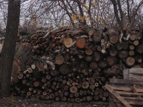 sprzedam drewno topolowe