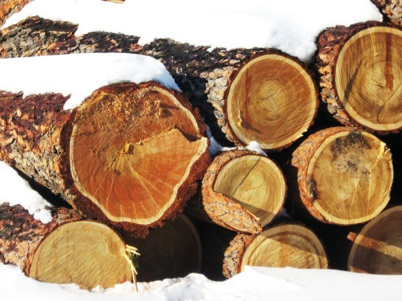 ОМСК-  сибирский лес